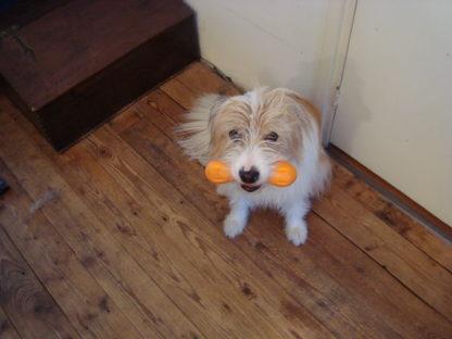 Hurley M oranje met Blitzz