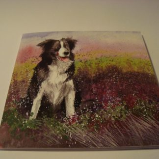 Wenskaart collie and heather Alex Clark 14x14