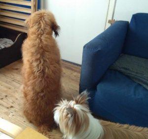 Mazzel en Blitzz klaar voor de wandeling