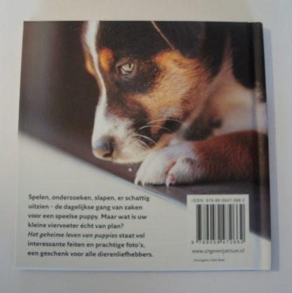 Het geheime leven van puppies achterkant