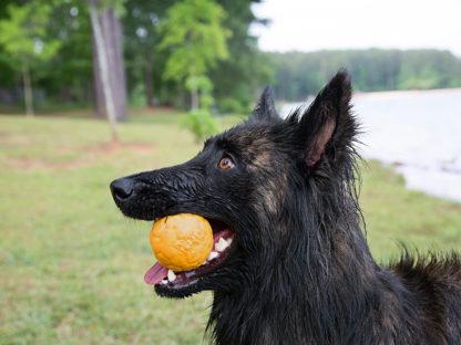 Air Boz Dandilion geel met hond