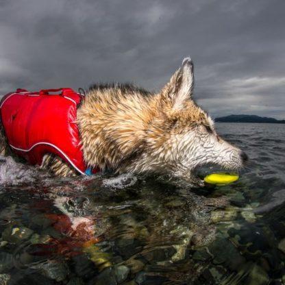 lekker in het water spelen met de skipping stone