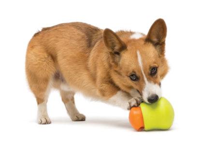 hondje speelt met de toppl