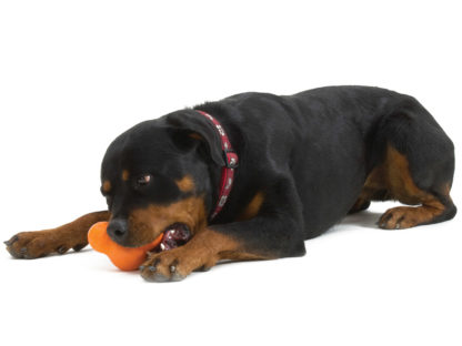 tux-tough-dog-toy-rottweiler